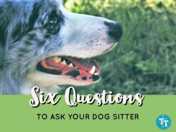 Six Questions to Ask Your DogSitter