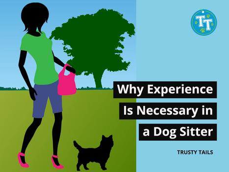 Why Experience Is Necessary in a Dog Sitter