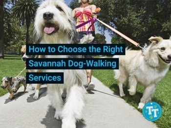 How to Choose the Right Savannah Dog-Walking Services