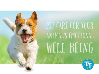 Pet Care for Your Animal's Emotional Well-Being