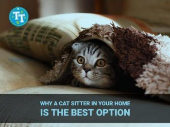 Why a Cat Sitter in Your Home is the Best Option