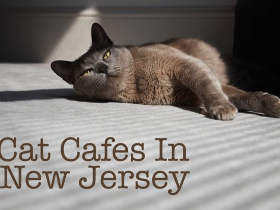 Cat Cafes In New Jersey