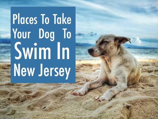 Places To Take Your Dog To Swim In New Jersey