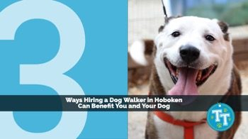 3 Ways Hiring a Dog Walker in Hoboken Can Benefit You and Your Dog