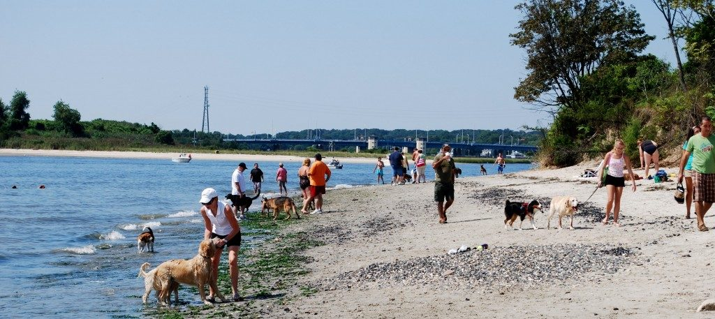 Places To Take Your Dog To Swim In New Jersey - Trusty Tails