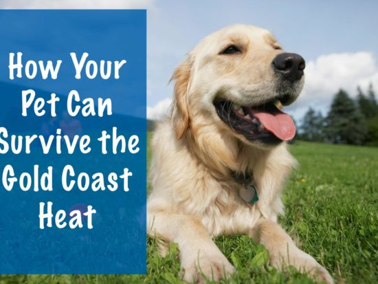 How-Your-Pet-Can-Survive-the-Gold-Coast-Heat-