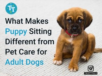 What Makes Puppy Sitting Different from Pet Care for Adult Dogs