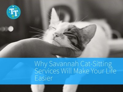 Why Savannah Cat-Sitting Services Will Make Your Life Easier