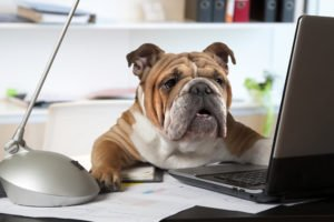 English Bulldog laptop