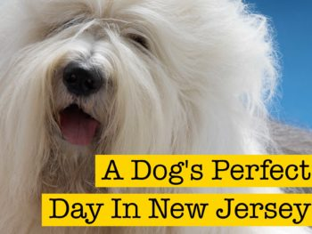 A Dog's Perfect Day in New Jersey