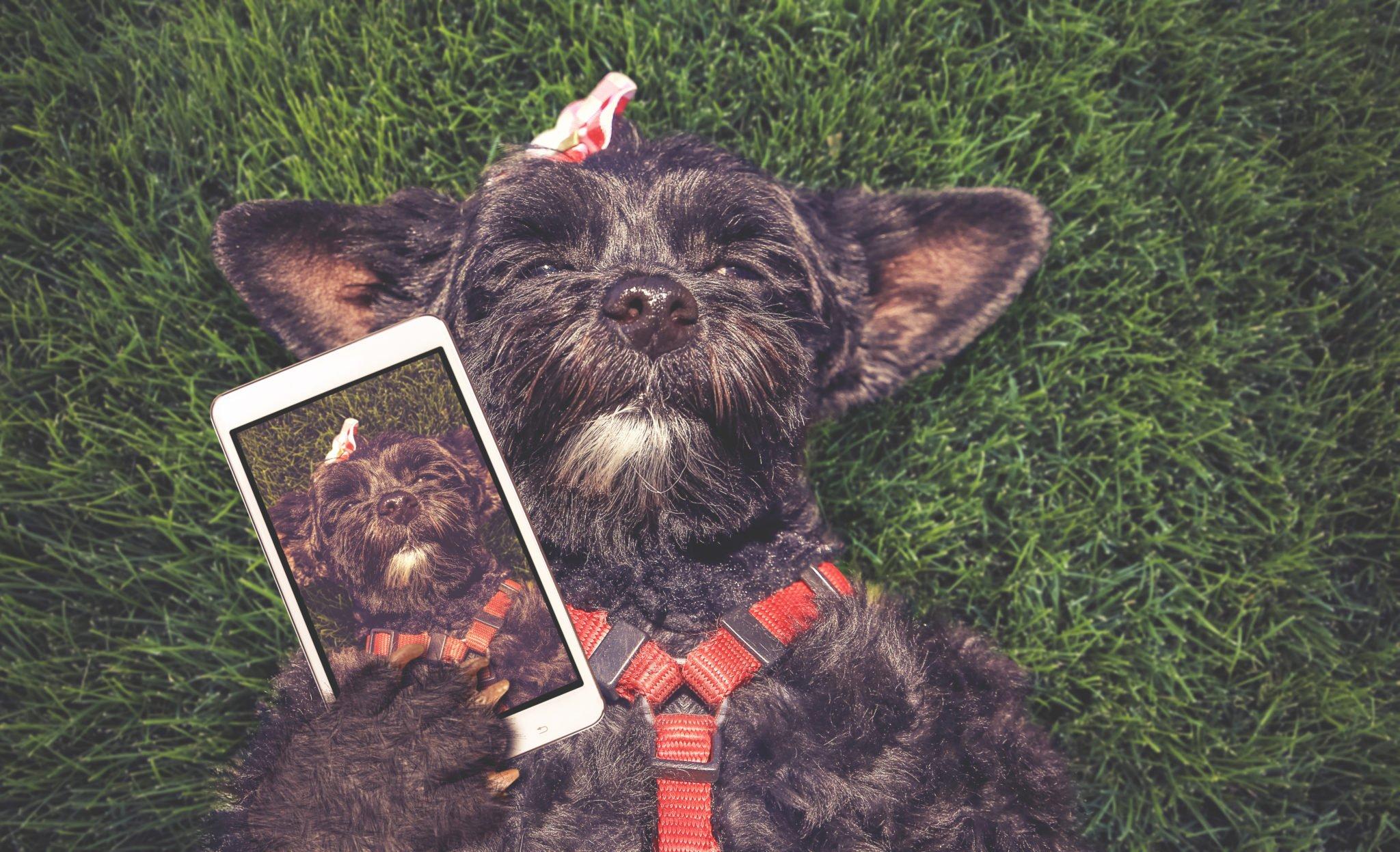 smartphone dog frenchie