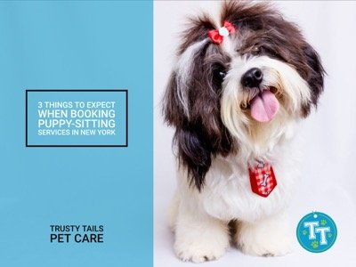 3 Things to Expect When Booking Puppy-Sitting Services in New York
