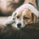 How to Make a Senior Dog Happy