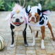top 10 halloween events for dogs in nyc nj