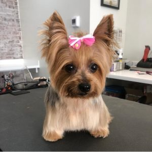 dog grooming trusty tails