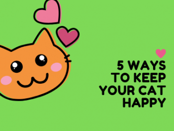 4 Ways to Keep Your Cat Happy