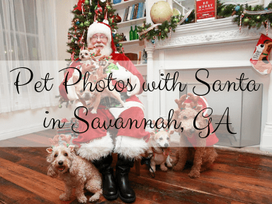 pet photos with Santa in georgia